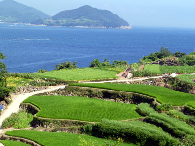 namhae terraced rice fields